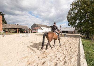 Koně majitelů