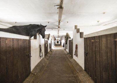Koně ustájené