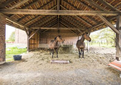 Koně Jezdeckého klubu